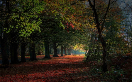 wonderland - autumn, forest, tree, leaves