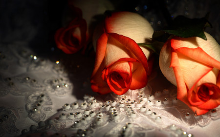 Beautiful Roses - with love, red, pretty, orange, rose, beautiful, rhinestones, still life, orange roses, photography, pearl, love, flowers, beauty, gems, for you, light, lovely, romantic, romance, colors, orange rose, petal, roses, diamonds, flower, nature