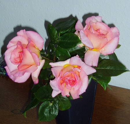Roses from our garden. - scent, beautiful, roses, pink