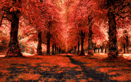 Red Forest Autumn Wallpaper