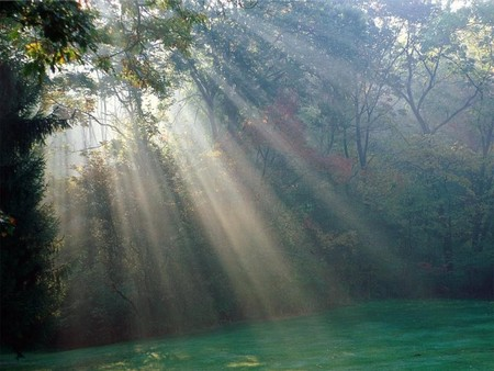 Scenery Of Sunbeam - Forests & Nature Background Wallpapers on ...