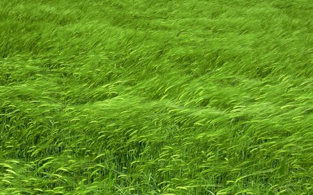 Grass - grass, green, nice, beautiful, nature, wind