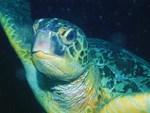 Sea Life 55