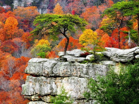 Color Rock - colorful, white, pink, amazing, background, natural, orange, branches, awesome, rocks, autumn, cool, leaf, peaks, seasons, stones, fullscreen, black, leaves, gray, scarlet, red, desktop, multicolor, mounts, plants, violet, scarlat, rocky, colors, nice, mountains, trees, nature, yellow, wallpaper, beautiful, trunks, purple, green, view