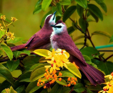 Colour on the wing - long tail, coloured, birds, white, flowers yellow, burgundy, pair, blue