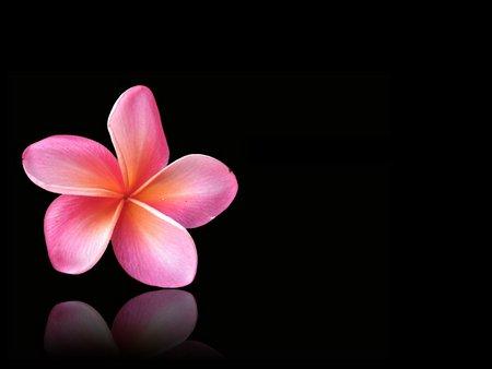 Comments on flower on black flowers wallpaper id 395120 desktop flower on black mightylinksfo