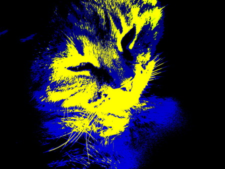 Blue and gold cat. - gold, stripes, whiskers, cat, blue
