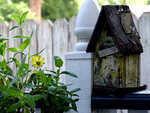 Birdhouse flowers