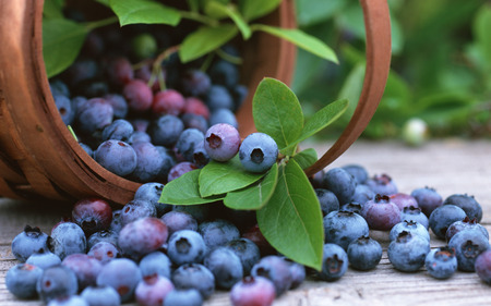 Basket with Blueberries - delicious, berry, fruits, blue, blueberries
