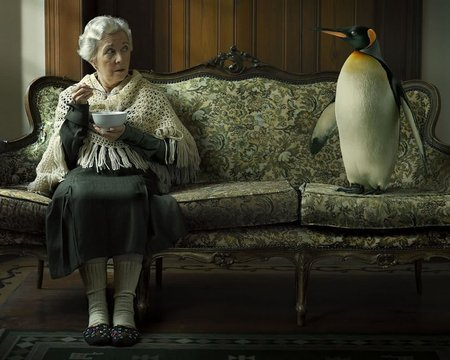 Visitor - old woman, couch, penguin, its so cool, fun, funny, visitor