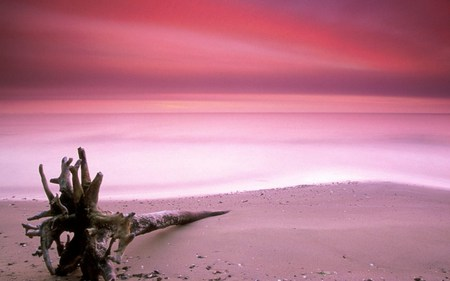 pink sands beaches nature background wallpapers on desktop nexus