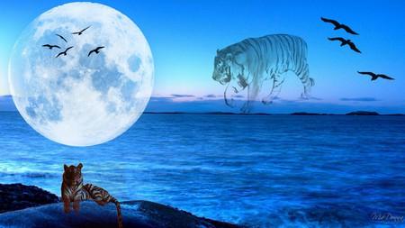 Tiger Moon Sky Nature Background Wallpapers On Desktop Nexus