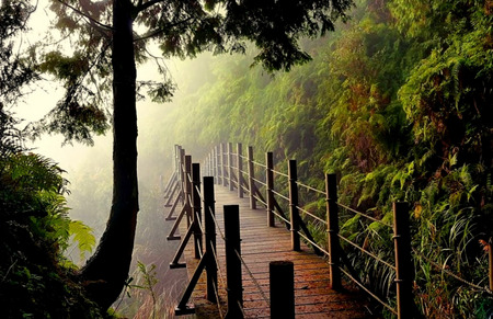 Misty Morning Forests Amp Nature Background Wallpapers On