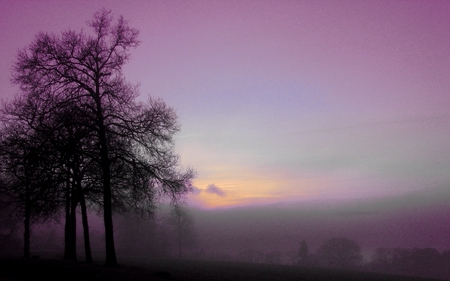 Purple morning - peaceful, light, other, amazing, sun, mystic, winter, fog, awesome, sunrise, sky, cold, cool, grass, fields, mysterious, photography, tree, morning mist, fairy, country, myst, twilight, landscape, mist, blue, gorgeous, trees, nature, beauty, beautiful, purple, dreamy, foggy, field, morning, calming