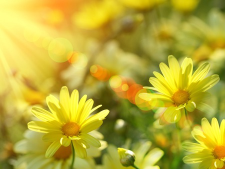 Burst of Summer Sunshine - daisies, orange, summer, flowers, yellow, sun rays, sunshine