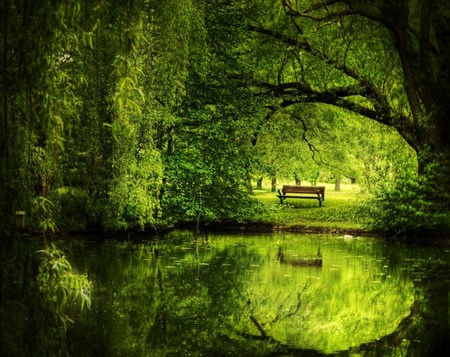 Green Space Forests Amp Nature Background Wallpapers On