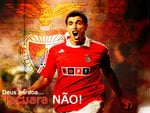 Cardozo wallpaper