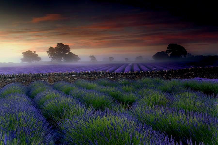 Misty Field - pretty, lavender, beautiful, sunset, clouds, fog, afternoon, sundown, nice, sunrise, morning, evening, mists, blue, lovely, england, sky, trees, mist, purple, nature, meadow, field