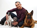 Cesar and dogs!