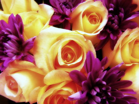 Yellow And Purple Flowers Flowers Nature Background