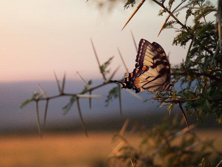 Beautiful Butterfly - beautiful, butterflies, animals, trees