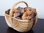 Basket of wrinkles