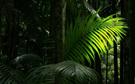 Rainforest Frond - forest, green, nature, trees, rain