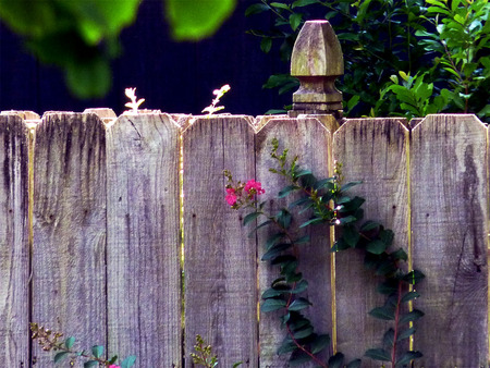 flowers against a fence - fence, flowers, crepe myrtle, post, yard