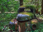 Rust in the forest