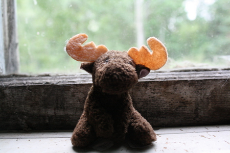 Rupert - cute, nature, photography, moose