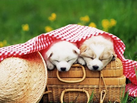 Puppy picnic - basket, picnic, puppy, dog, hat