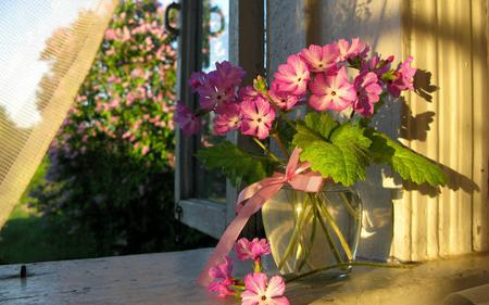 Lovely Flowers - sunlight, pink, sun, window sill, flowers, water, summer, rays, still life, window, super, photography, shine, ribbon, tree, red, flower, spring time, pink flowers, nice, petals, trees, nature, vase, beauty, beautiful, lovely, bouquet, room, spring, pretty, green, view