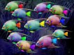neon fishies