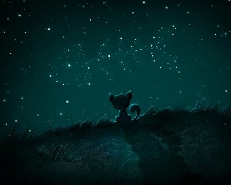 Dreams - fish, night, stars, cat