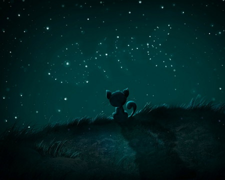 Dreams - fish, stars, cat, night