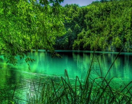 HDR Summer in the Lake Plitvice, Croacia - nice, calm, scenario, beauty, forests, waterscape, paisage, wood, rivers, widescreen, paysage, black, sky, trees, lagoons, water, cool, awesome, photoshop, bay, landscape, colorful, beautiful, laguna, seasons, trunks, photography, leaves, roots, sand, green, grove, mirror, scenery, blue, photo, amazing, lakes, transparent, clear, colors, wall, swell, leaf, pond, paisagem, plants, summer, hdr, colours, reflected, branches, reflections, scene