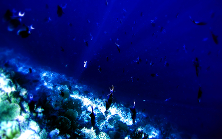 DEEP      SEA  - reef, fishes, fish, ground, coral, reefs, beautiful, u-boat, under, water, nature