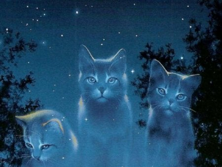 Cat spectrum - cat, kitten, spectrum, blue, night