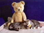 Sweet dreams with bear toy