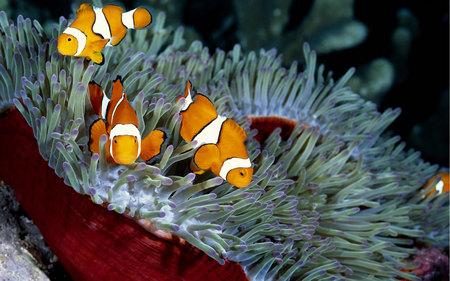 Deep Sea Beauty - orange, ocean, reef, fish, sea, nature