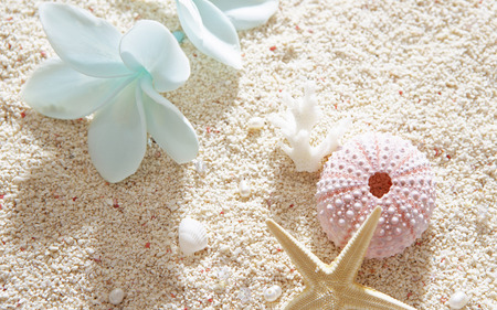 Shells - flowers, shells, shell, blue, photography, white, colors, pink, sand, nature, pearls, beautiful, lovely, beach