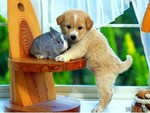 Rabbit and Puppy