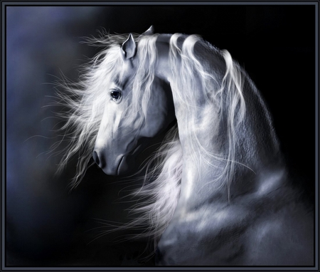 Moonlight Shadow Horses Amp Animals Background Wallpapers