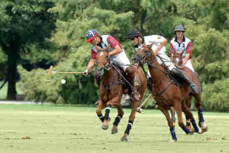 Polo Riding - horses, match, riding, polo ponys