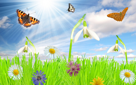 Beautiful Scene - colorful, flowers, snowdrops, grass, blue, shell, sky, abstract, nature, fantasy, animals, clouds, cornflower, butterflies, green