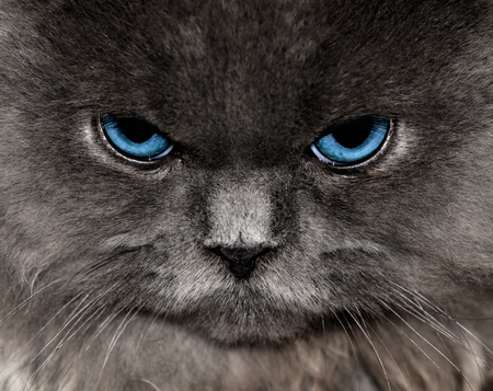 Im Annoyed With You - persian, feline, cat, angry