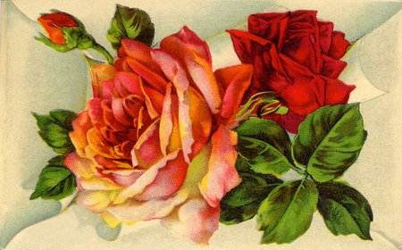 Vintage Rose Desktop Wallpaper Vintage Rose Desktop Wallpaper
