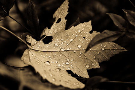 leaf - ancient, falldrops, light, leaf