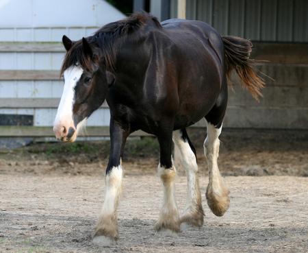 Husband Horse - mare, equus, horse, husband horse
