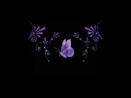 PURPLE ON BLACK Butterflies Animals Background Wallpapers On